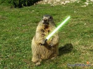 funny-groundhog-03